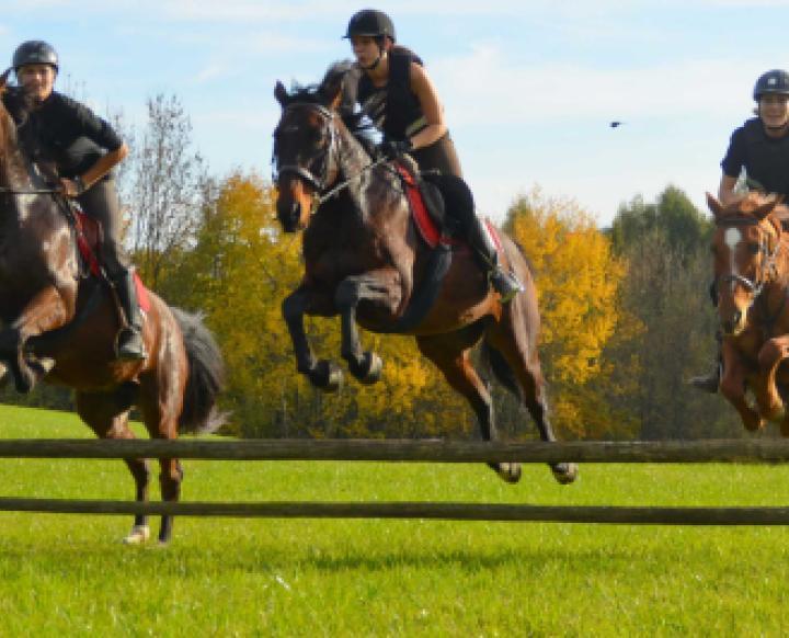 Relax on Horsebacks. Iris Muhm