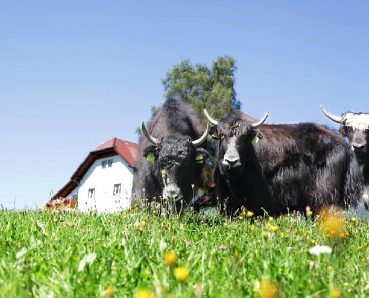 Kranzlerhof. Adelheid  Messner